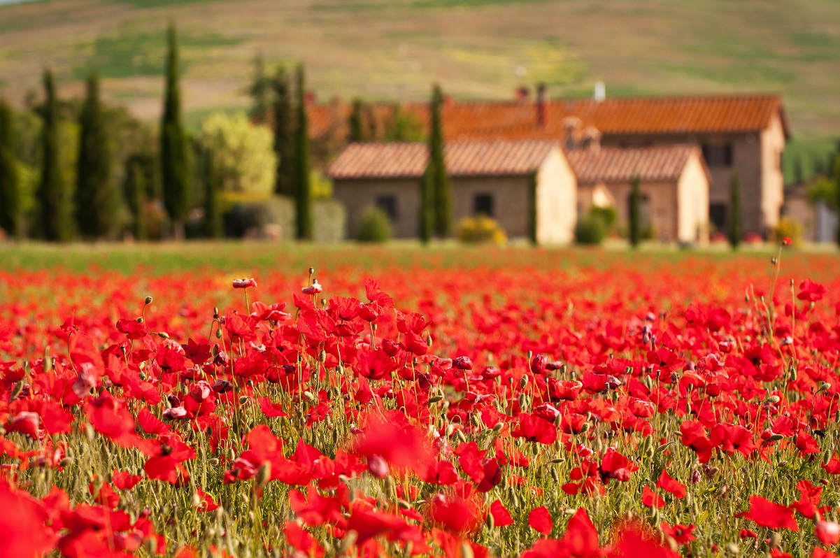 TOSCANE_CAMPAGNE_COQUELICOTS WEB